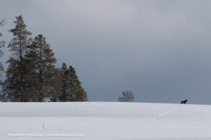 D289032 300x199 Yellowstone Winter Photography Tour 2011