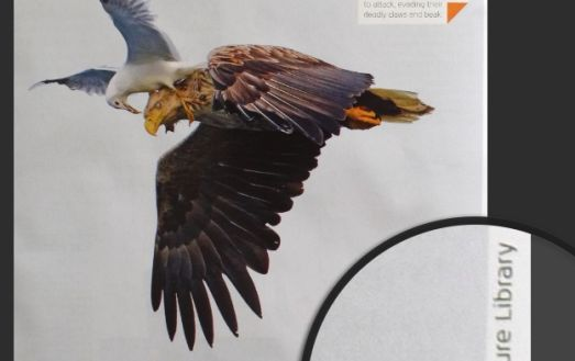 This fabulous image of a gun attacking an eagle was published in an airline magazine and was my first post on the subject of magazines not creeping photographers properly.