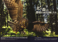Cover of 2012 Wildlife View