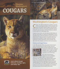 Cover of 2013 Discover Washington's Cougars Brochure