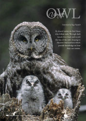 Cover of 2014 Bare Essentials: Way of Owl, Page 21