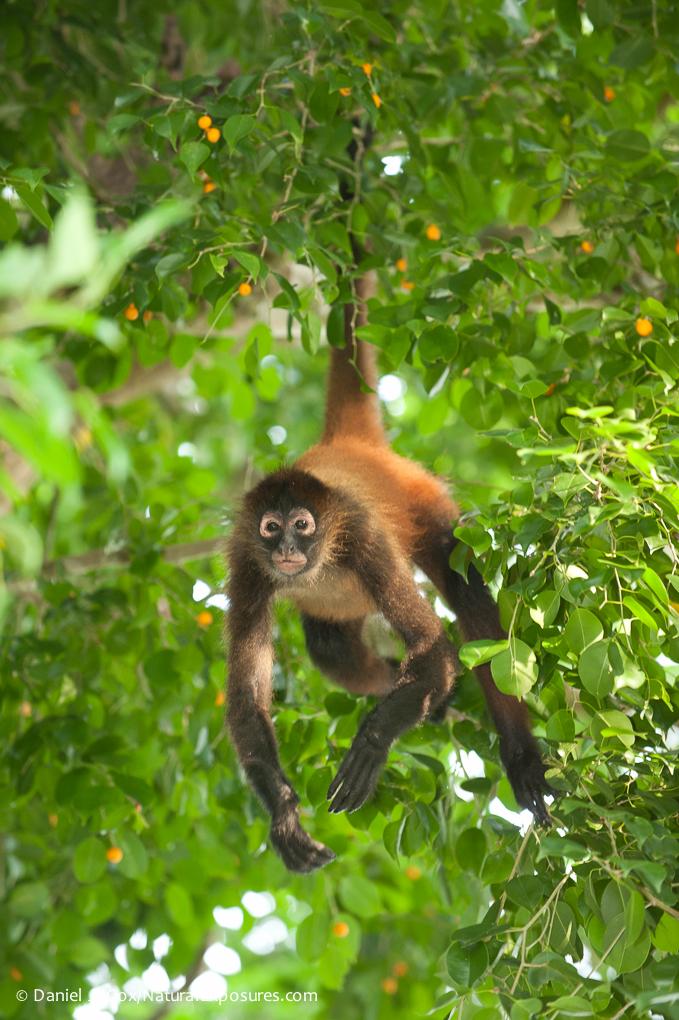 D304193 Costa Rica