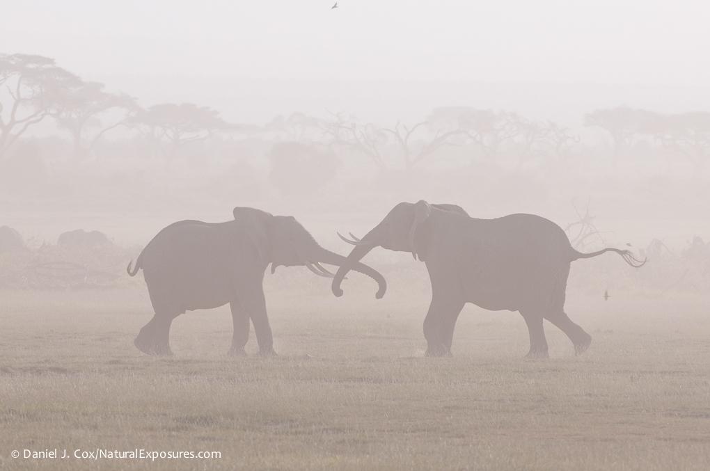 D242531 Kenya