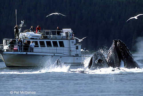 ALASKA PHOTO TOUR WHALE BOAT