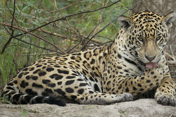 Photo for 2016 Brazil Pantanal Jaguar Wildlife Photo Expedition II