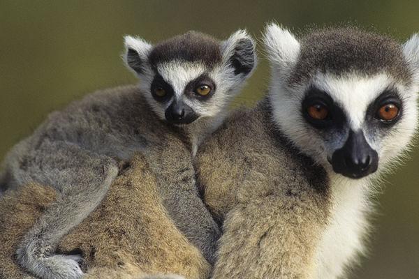 Photo for 2017 Ultimate Madagascar Photography Tour I