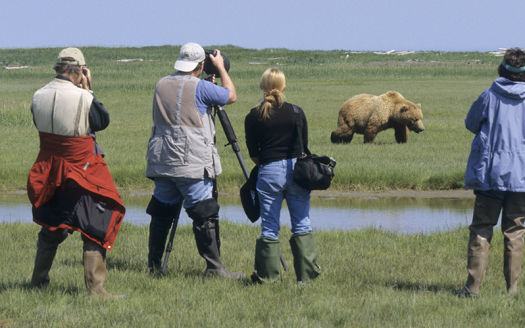 Photo for 2016 Alaska Brown Bear Boat Photography Tour I